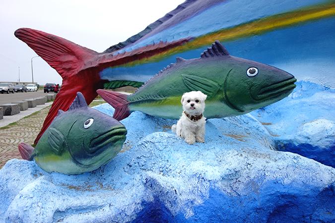 狗狗Gogo!十七公里海岸觀光帶