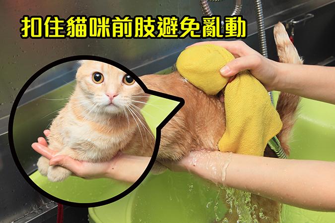 幫貓咪洗澡5-steps-319