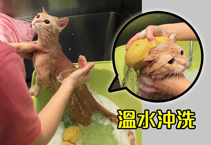 幫貓咪洗澡5-steps-377