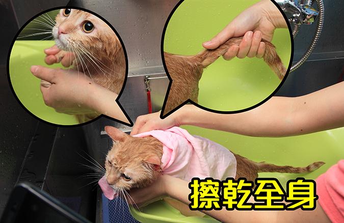 幫貓咪洗澡5-steps-404