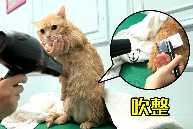 幫貓咪洗澡5-steps-450