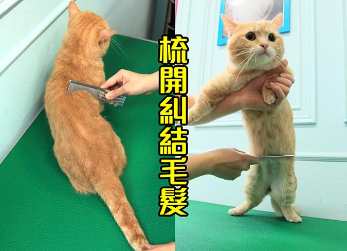 幫貓咪洗澡5-steps-462