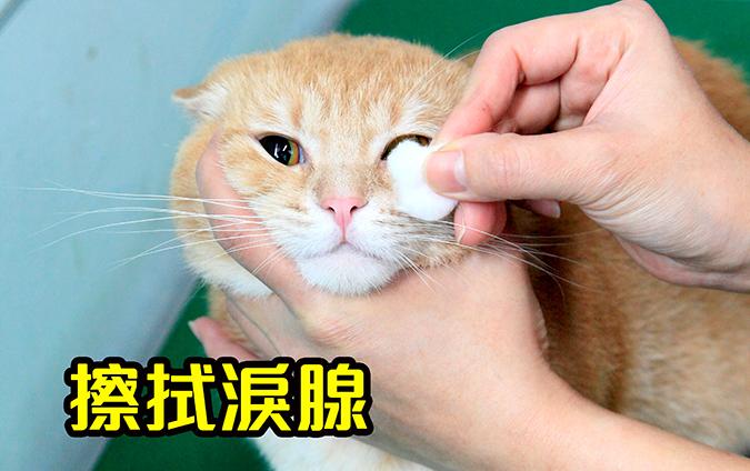 幫貓咪洗澡5-steps-484