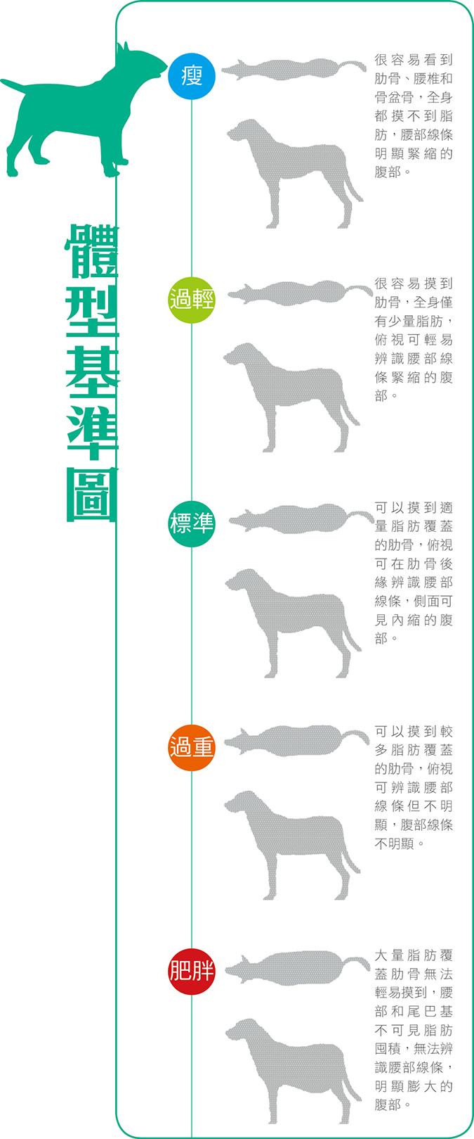 牛牛的日常煩惱-法國鬥牛犬體型基準圖