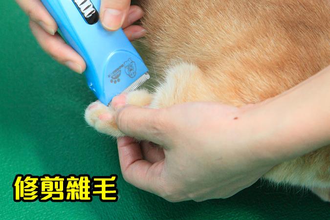 幫貓咪洗澡5-steps-238