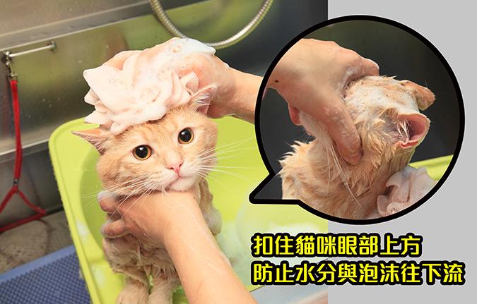 幫貓咪洗澡5-steps-356