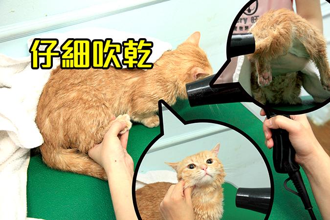 幫貓咪洗澡5-steps-444