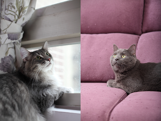 日本寵物潮流:室內化小型化