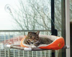 original-kitty-cot-1