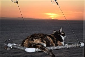 original-kitty-cot-2