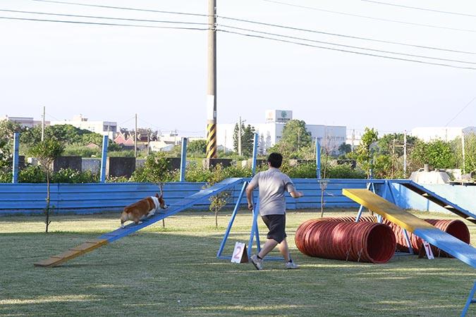 敏捷犬障礙賽-002