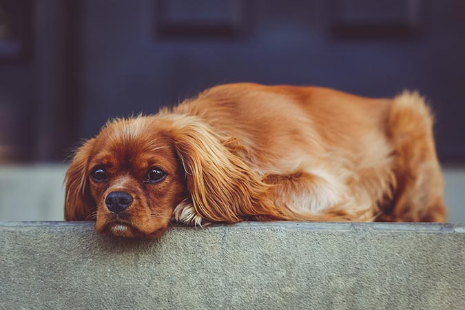 狗狗常見生殖系統疾病-若無其事