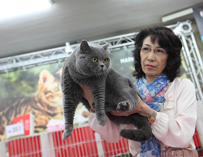 貓模選拔大賽-審貓005