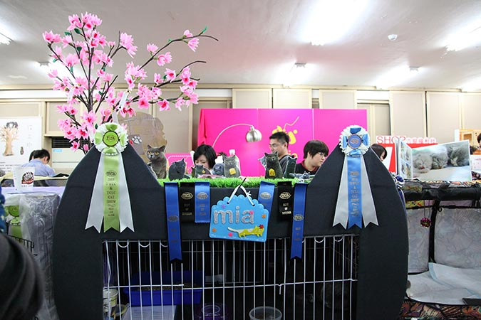 貓模選拔大賽-貓龍比賽2