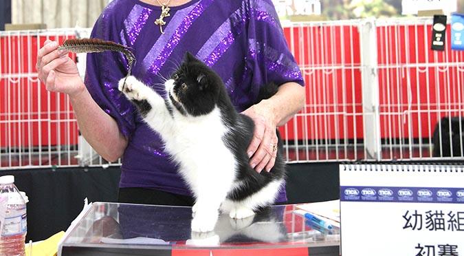 貓模選拔大賽-逗貓棒2