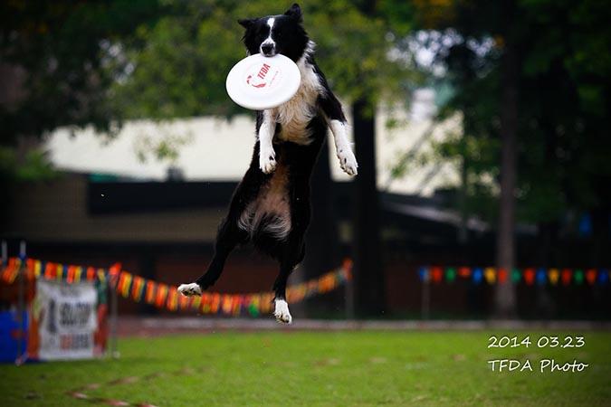 飛盤狗大賽-攝影姜駿憲-7