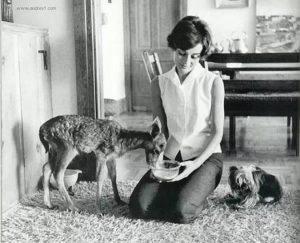 世界名人寵物-奧黛麗赫本audrey-hepburn7-4