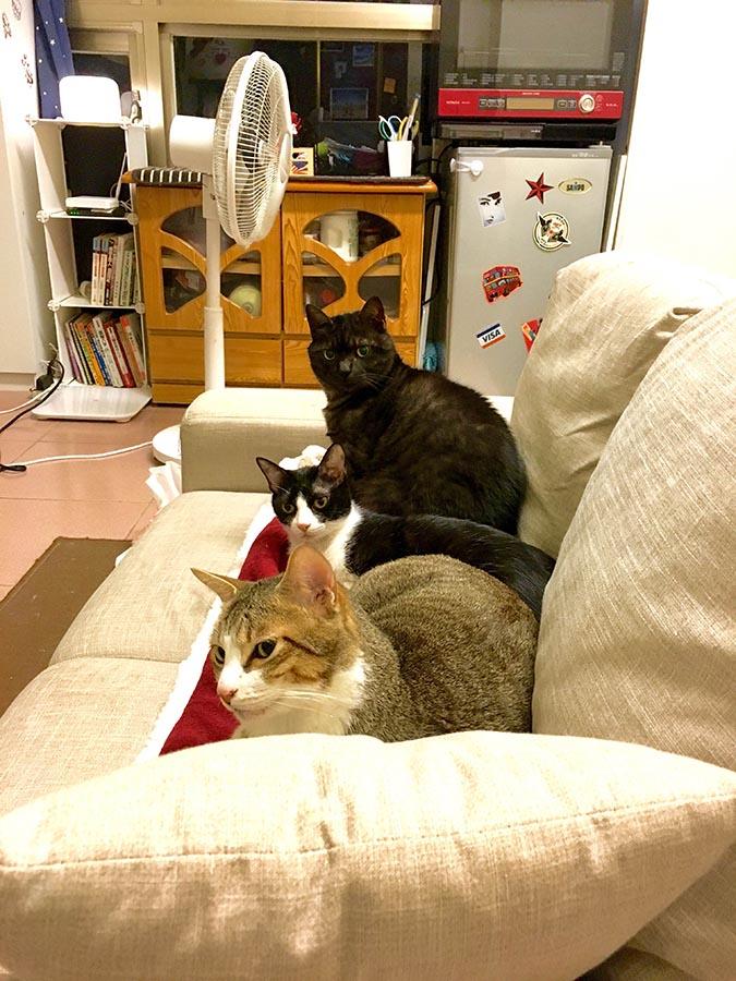 大陰盜百貨-盜家三貓的生活日常-005