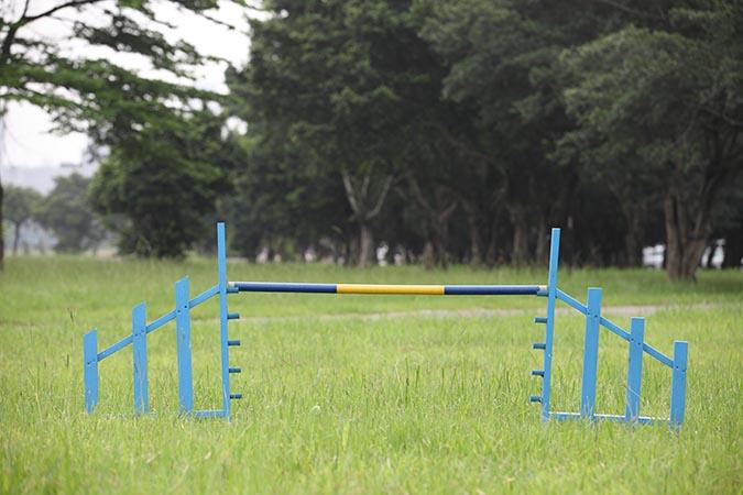 敏捷犬障礙賽-跨欄