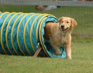 敏捷犬障礙賽-doggangs-com