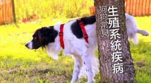 狗狗常見生殖系統疾病-675x372