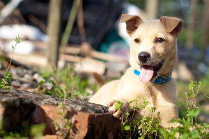 訓練師眼中的米克斯-幼犬