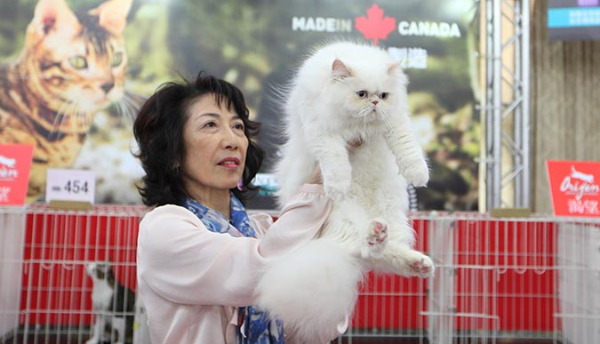 貓模選拔大賽-審貓002