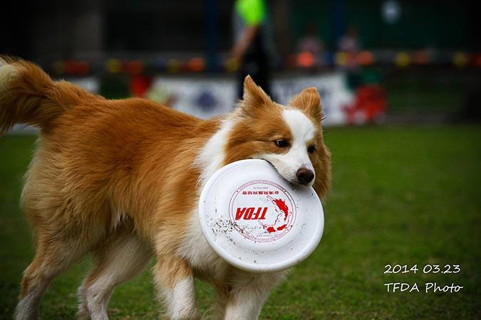 飛盤狗大賽-攝影姜駿憲-4