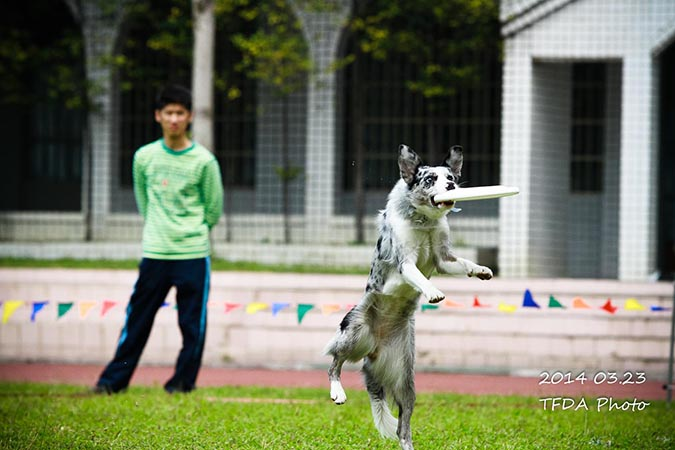 飛盤狗大賽-攝影姜駿憲-6