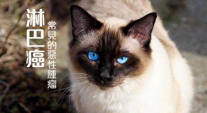 寵物常見的惡性腫瘤-淋巴癌675x372