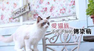 愛貓族不可不知的傳染病675x372