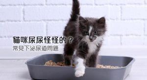 貓咪尿尿怪怪的常見下泌尿道問題675x372