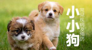 小小狗常見疾病及預防675x372