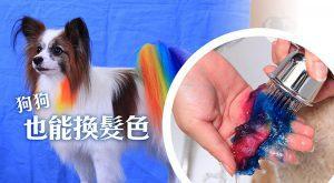 狗狗也能換髮色-675x372