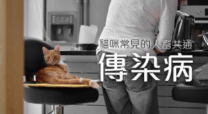 貓咪常見的人畜共通傳染病675x372