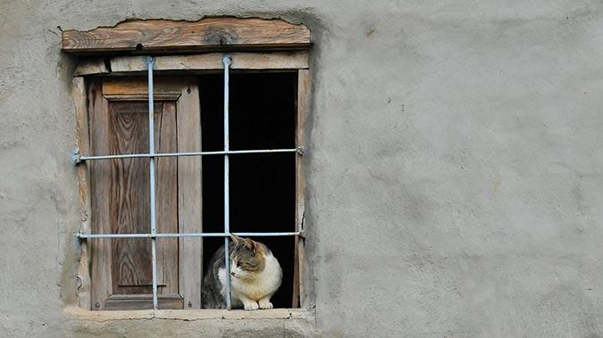 不可思議的貓咪內心戲-看窗外