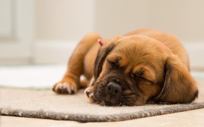 犬慢性腎病chronic-kidney-disease-嗜睡