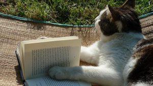 不可思議的貓咪內心戲-阻饒主人
