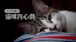 不可思議的貓咪內心戲675x372