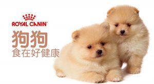 狗狗食在好健康675x372