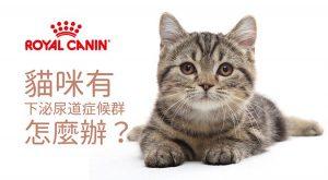 貓咪有下泌尿道症候群怎麼辦?675x372