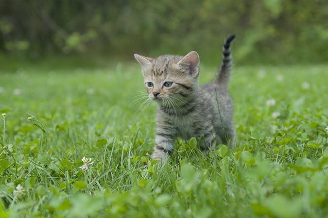 小貓眼睛濁濁