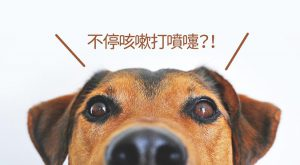 寵物不停咳嗽打噴嚏675x372