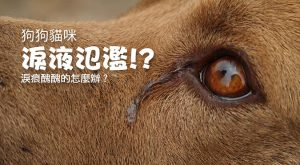 狗狗貓咪淚液氾濫-淚痕醜醜的怎麼辦?675x372