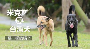 米克斯跟台灣犬是一樣的嗎675x372