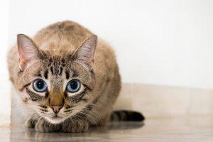 貓眼睛變圓