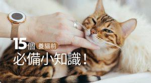 15個養貓前必備小知識675x372
