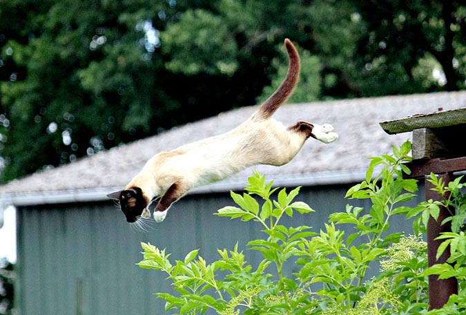 貓從屋頂上跳下