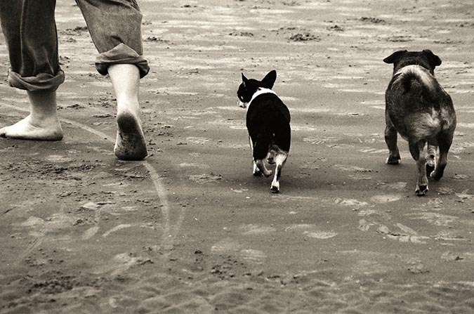 狗跟前跟後