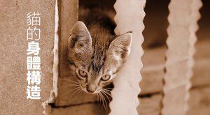 貓的身體構造675x372
